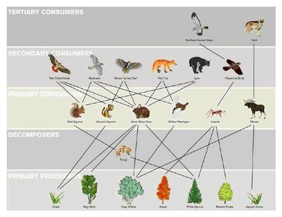 Food chains and food webs the taiga.